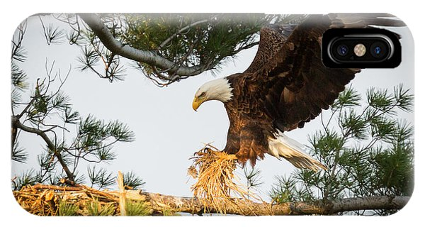 Bald Eagle Building Nest IPhone Case