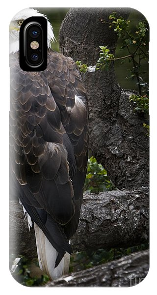 IPhone Case featuring the photograph Bald Eagle by David Millenheft