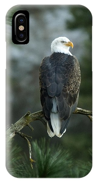 Bald Eagle In Tree IPhone Case