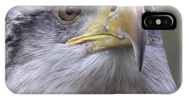 Bald Eagle - Juvenile IPhone Case
