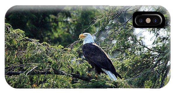 Bald Eagle Phone Case by Kathy Eastmond