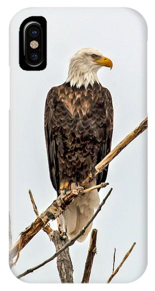 Bald Eagle On A Branch IPhone Case