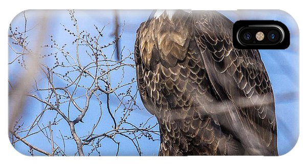 Bald Eagle On The Iowa River IPhone Case