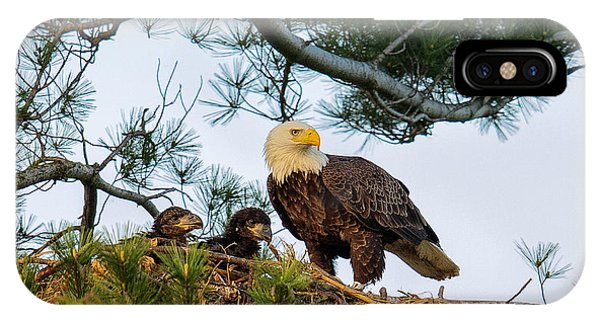Bald Eagle With Eaglets  IPhone Case