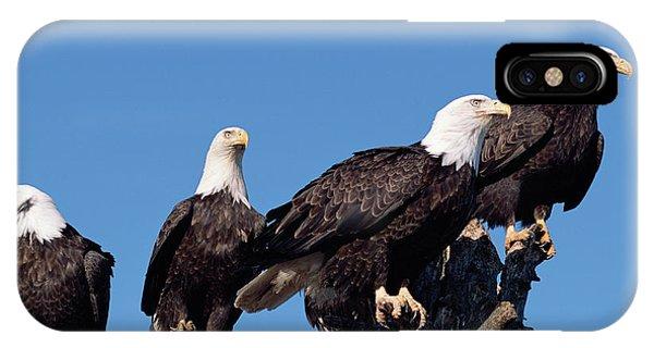 Mp iPhone Case - Bald Eagles Quartet by Yva Momatiuk and John Eastcott