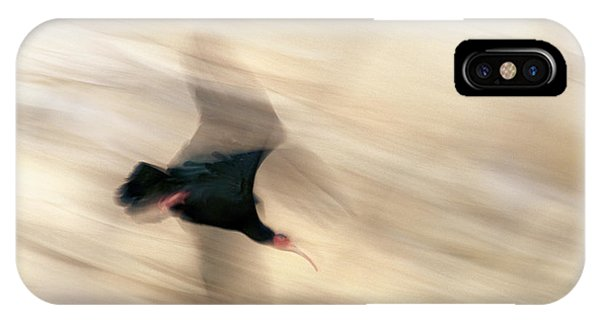 Bald Ibis IPhone Case