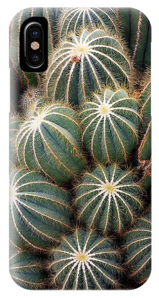 Ball Cactus (parodia Magnifica) Phone Case by Daniel Sambraus/science Photo Library