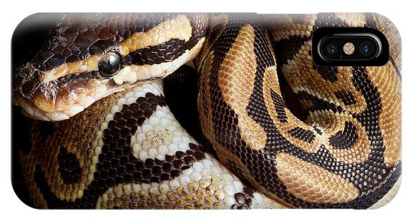 Ball Python Python Regius IPhone Case