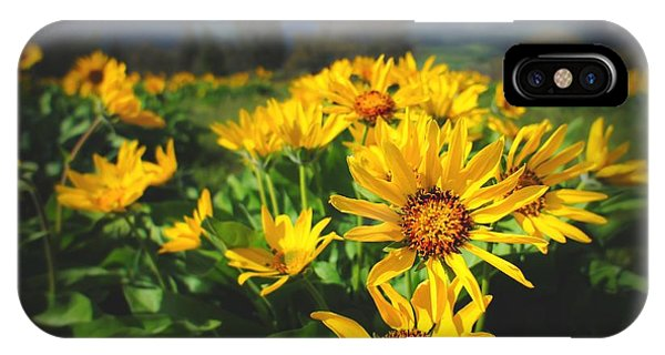 Balsamroot Of The Gorge IPhone Case