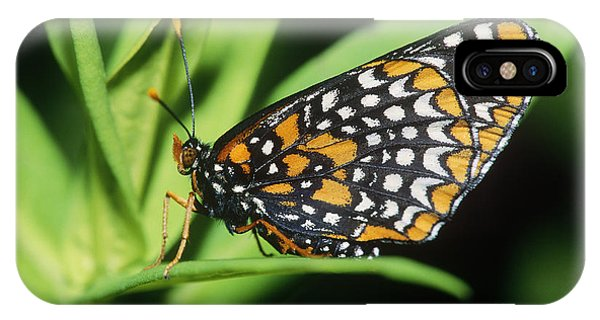 Pterygota iPhone Case - Baltimore Checkerspot Butterfly by Larry West