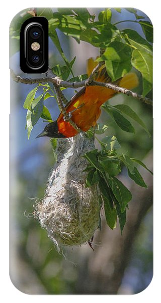 Baltimore Oriole And Nest Phone Case by Jill Bell