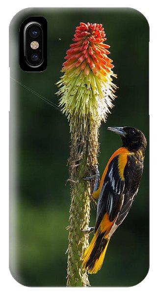 Baltimore Oriole Delight 2 IPhone Case