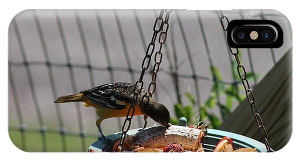 Baltimore Oriole Fruitplate Phone Case by Margo Miller