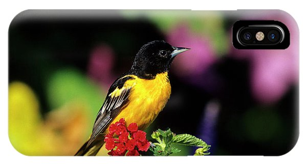 Avian iPhone Case - Baltimore Oriole (icterus Galbula by Richard and Susan Day