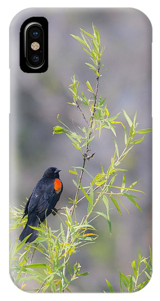 Bamboo And Bird IPhone Case
