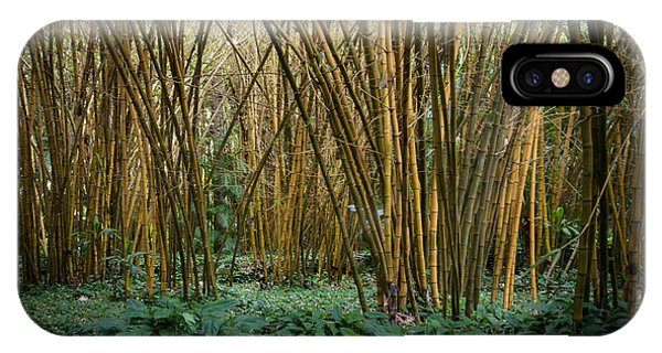 Bamboo Grove IPhone Case