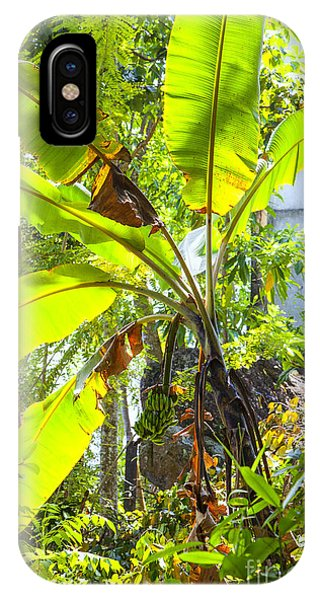 Tropes iPhone Case - Banana Palm Tree With Luminous Shine by Gina Koch