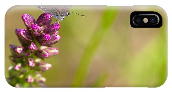 Banded Hairstreak Butterfly IPhone Case