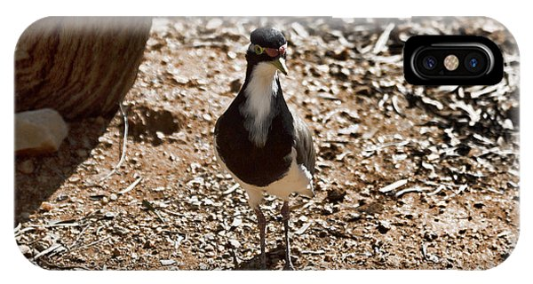 Banded Lapwing IPhone Case