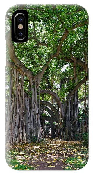 Banyan Tree At Honolulu Zoo IPhone Case