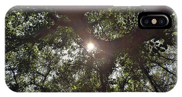 Banyan Tree IPhone Case