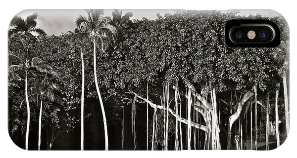 Banyan With Palms IPhone Case