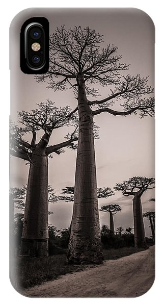 Baobab Avenue IPhone Case