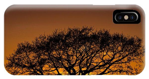 Baobab IPhone Case