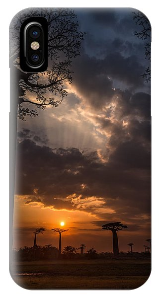 Baobab Sunrays IPhone Case