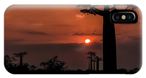 Baobab Sunrise IPhone Case