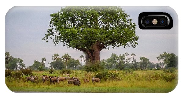 Baobao Tree IPhone Case