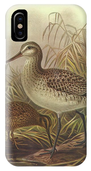 Chatham iPhone Case - Bar Tailed Godwit And Chatham Island Snipe by Dreyer Wildlife Print Collections