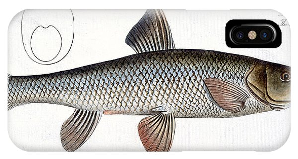 Ichthyology iPhone Case - Barbel by Andreas Ludwig Kruger