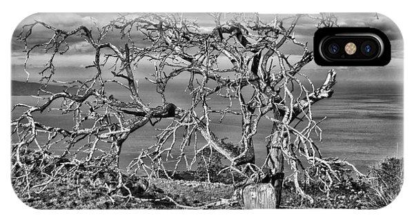 Bare Tree In Hana IPhone Case