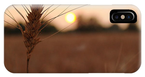 Barley Catches The Setting Sun In Autumn - Pennsylvania IPhone Case