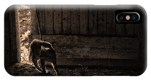 Barn Cat IPhone Case