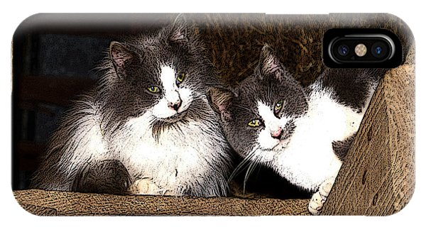 Barn Cats IPhone Case