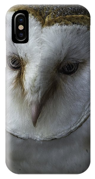 Barn Owl 2014-001 IPhone Case