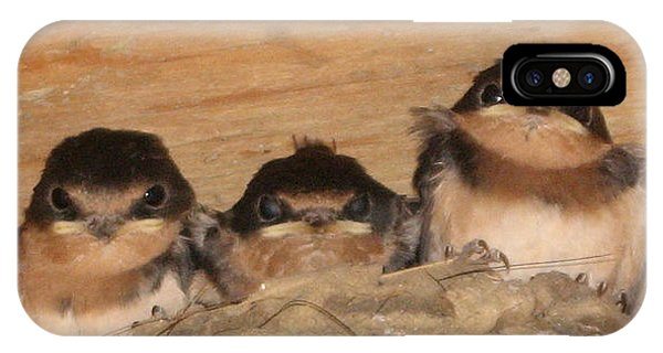 Barn Swallow Chicks 2 IPhone Case