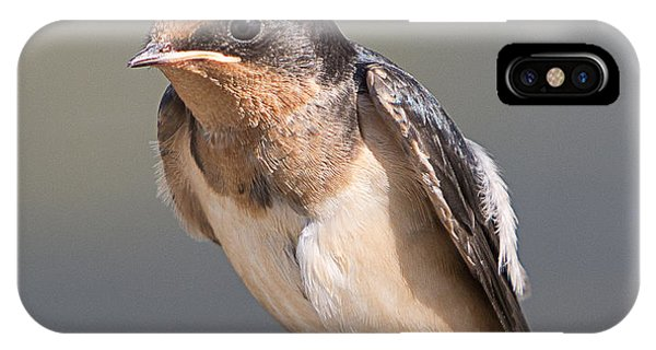 Horicon Marsh iPhone Case - Barn Swallow On Rope I by Patti Deters