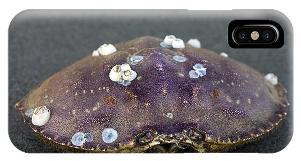 Barnacled Crab Shell IPhone Case
