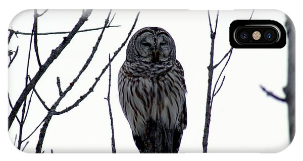 Barred Owl 4 IPhone Case