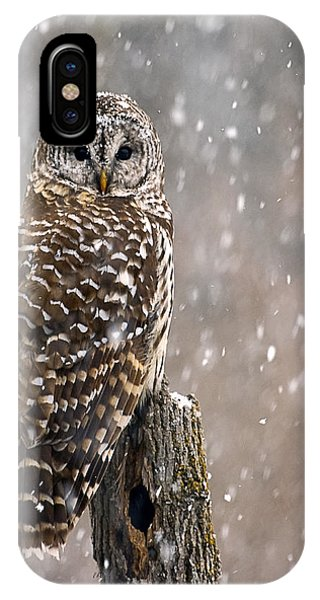 Barred Owl In A New England Snow Storm IPhone Case