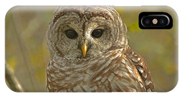 Barred Owl Looking At You Phone Case by Nancy Landry