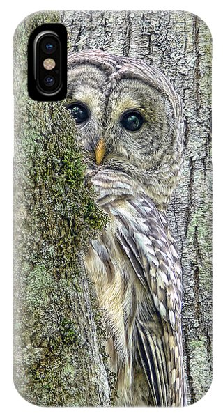 Bar iPhone Case - Barred Owl Peek A Boo by Jennie Marie Schell
