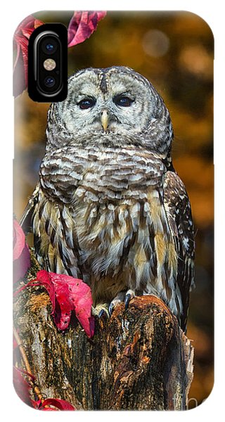 Barred Owl Phone Case by Todd Bielby