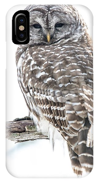 Barred Owl2 IPhone Case