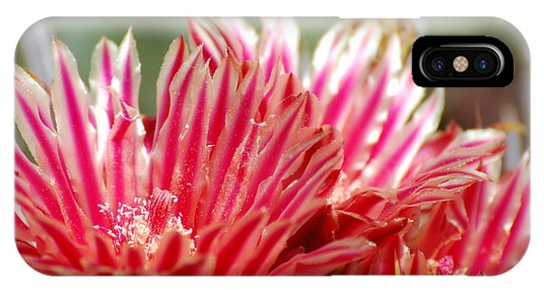 Barrel Cactus Flower IPhone Case
