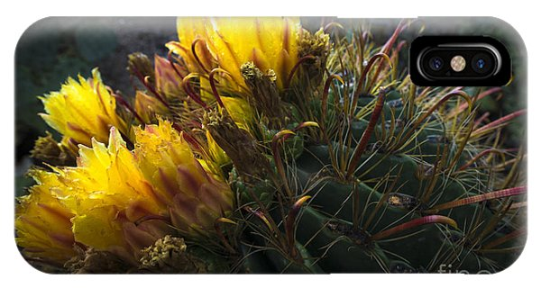 Barrel Cactus In Bloom 1 IPhone Case