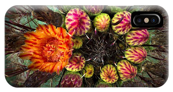 Barrel Cactus In Bloom 2 IPhone Case